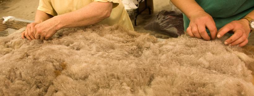 diervriendelijke-wol