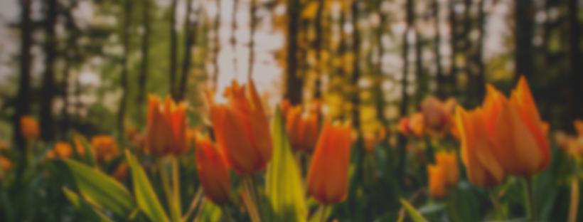 voorjaarsvakantie-korting-zijdewinkel